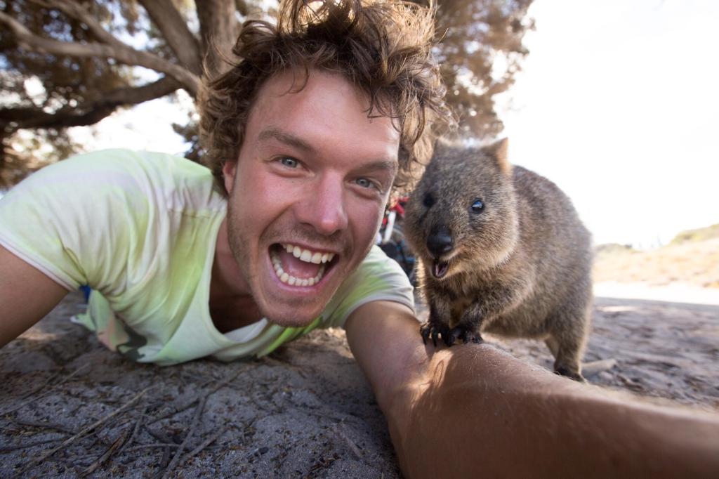 Quokka - Rottnest Island Western Australia