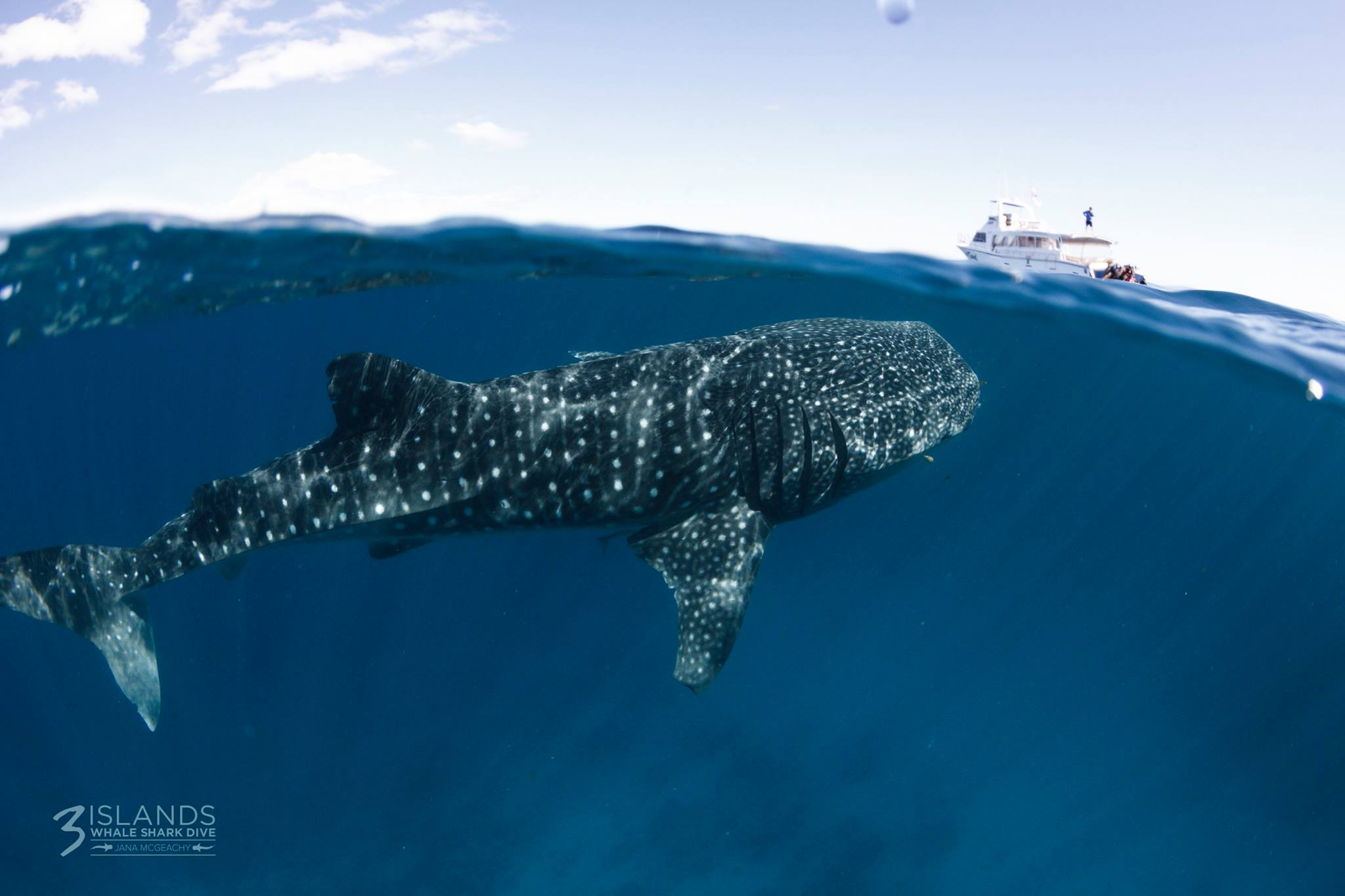 Whale shark diving - Western Australia 4